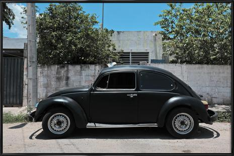 Mexican Beetle 16