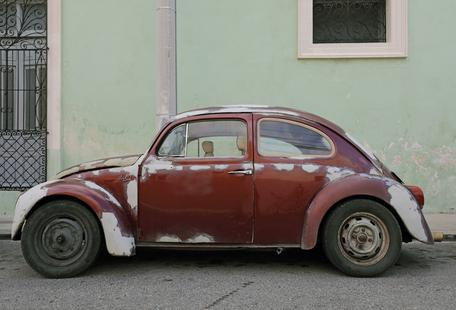 Mexican Beetle 19
