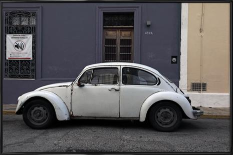 Mexican Beetle 20