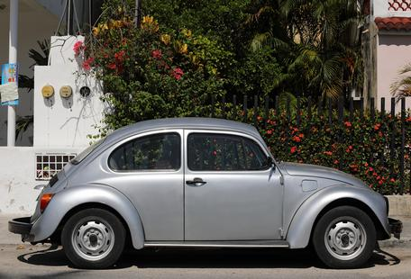 Mexican Beetle 21