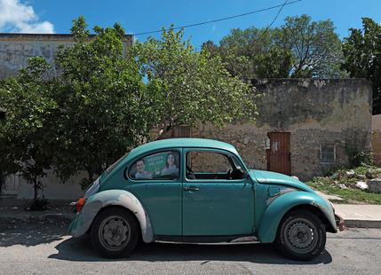 Mexican Beetle 22