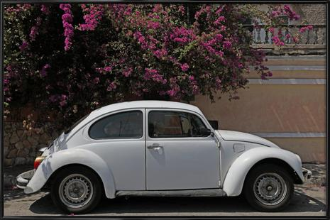 Mexican Beetle 24
