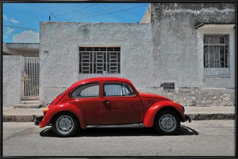 Mexican Beetle 25
