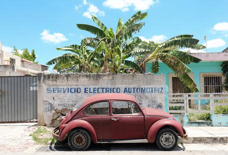 Mexican Beetle 3