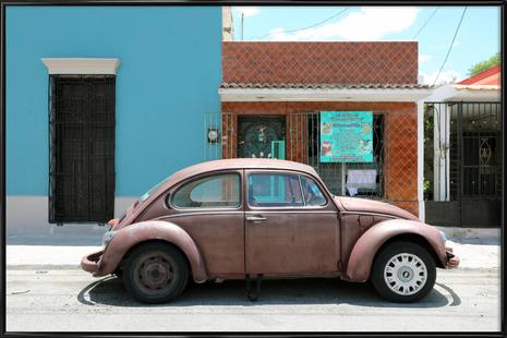 Mexican Beetle 4