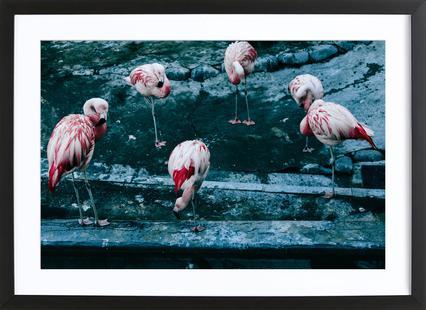 Flamingos by @esspeshal