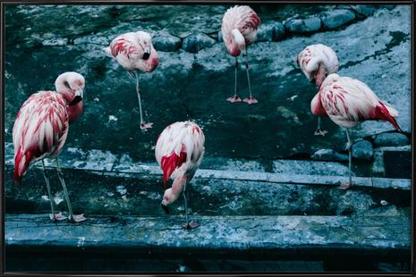 Flamingos by @esspeshal