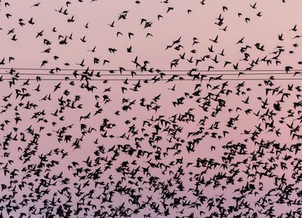Chaos in Bird Migration by @matthcon01