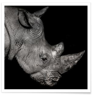 Rhino Profile by Lothare Dambreville