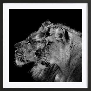 Lion Duo Profile by Lothare Dambreville