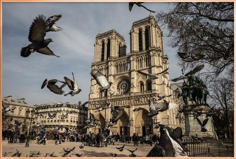 The Birds of Notre Dame by Michael Kraus