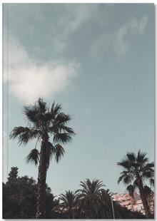 Palms XI