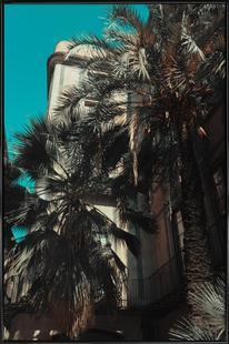 Palms XII