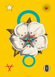 The Hypnotic Flower