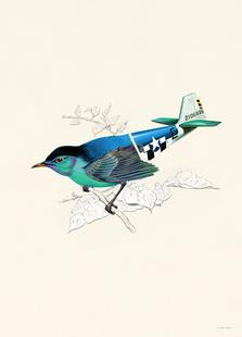 Aerofauna Blue