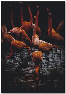 Dark Flamingos