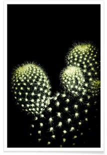 Dark Cactus