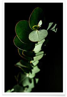 Nina's Eucalyptus