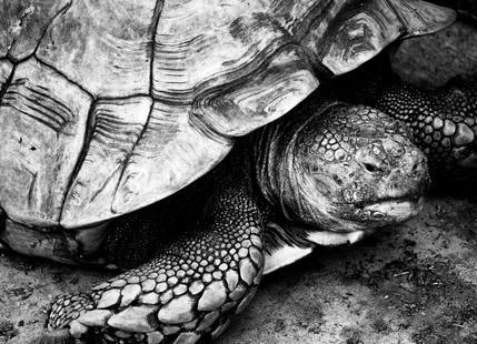 Tim the Turtle
