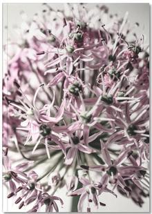 Marlies' Dandelion