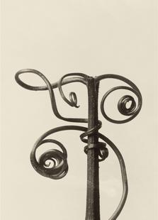 Cucurbita - Karl Blossfeldt
