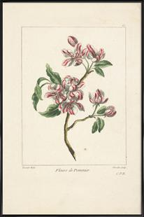 Juste Chevillet, Fleurs de pommier Caillou Marguerite, 1755 - Juste Chevillet