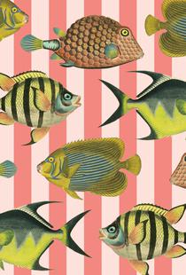 Pattern Fish Stripes