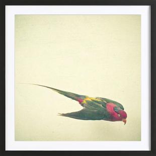 Bird study #4