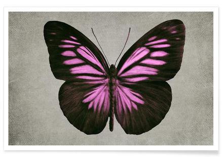Papillon (pink)