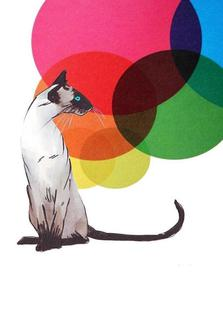 Siamese Cat with colorful balls