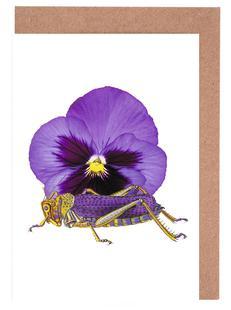 Purple Grasshopper and Viola