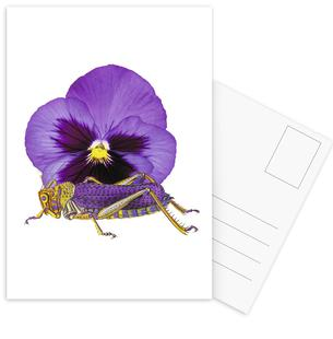 Purple Grasshopper and Viola