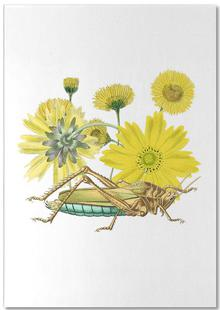 Yellow Flowers and Grasshopper