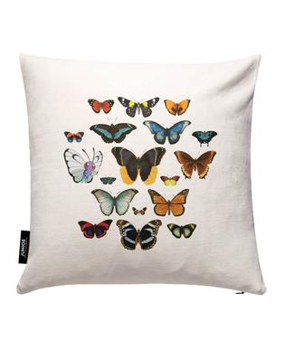 Entomology Cushion Cover