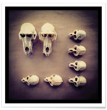 The Golden Skull Poster