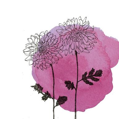 Chrysanthemum Impression sur alu-Dibond