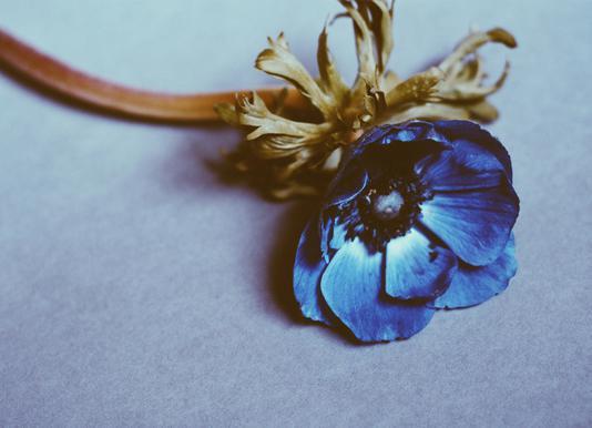 Fleur toile