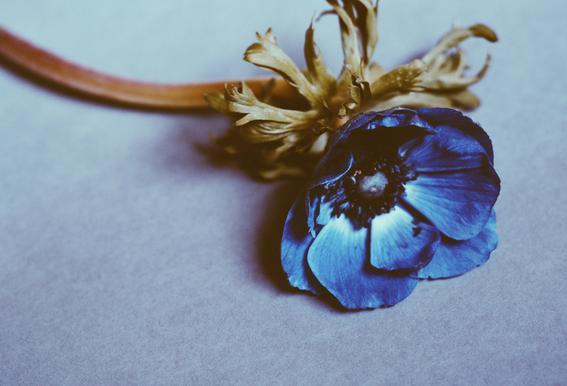 Fleur alu dibond