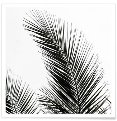 Palm Leaves 1