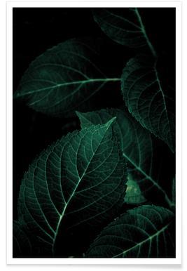 Dark Leaves 1 affiche