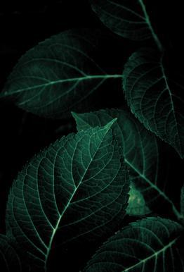 Dark Leaves 1 Acrylic Print