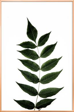 One Leaf poster in aluminium lijst