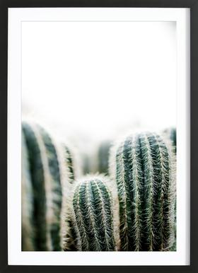 Cactus 1 -Bild mit Holzrahmen