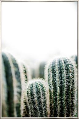 Cactus 1 -Poster im Alurahmen