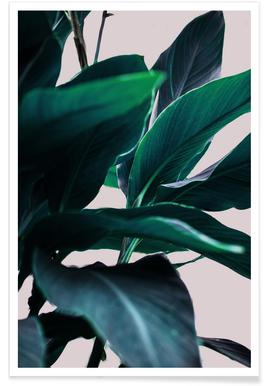 Palm Leaves 4 affiche