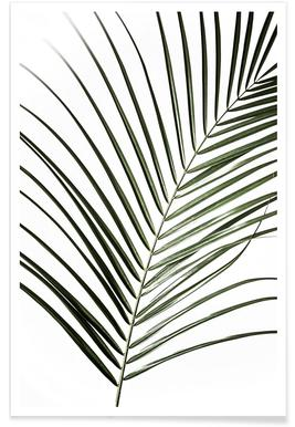 Palm Leaves 8 affiche