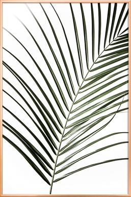 Palm Leaves 8