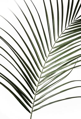 Palm Leaves 8 -Alubild