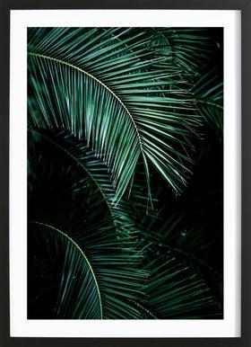 Palm Leaves 9 Framed Print