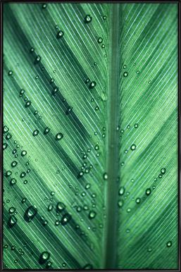 Palm Leaves 11 Poster i standardram